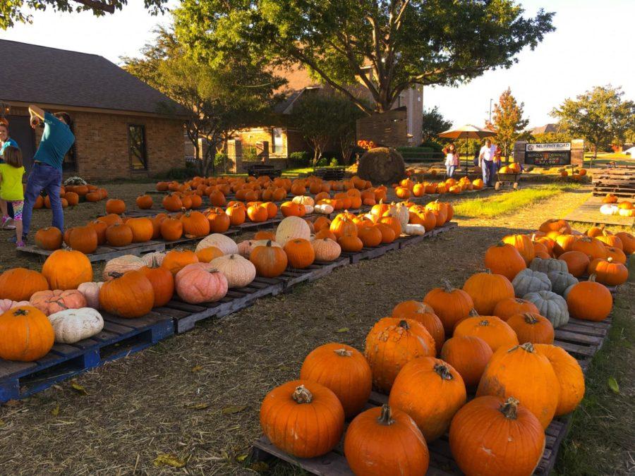 Rowlett+Park+and+Pumpkin+Patch